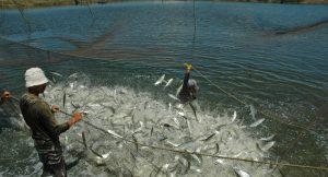 Hal Menarik Menjalankan Bisnis Perikanan
